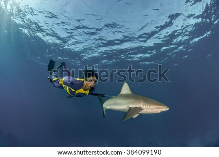 Shark scientist, Ryan Johnson, swimming alongside a galapagos shark in a brightly colored wetsuit - stock photo