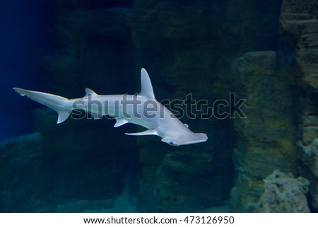 Shark Shark â?? fish-predators, dangerous and aggressive inhabitants of the ocean, the oldest known animals.
