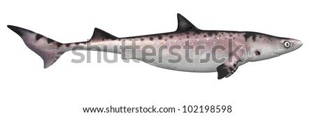 Shark side view - stock photo