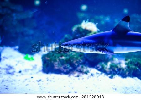 shark swimming - stock photo