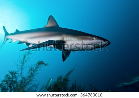 shark, underwater picture, South Africa - stock photo
