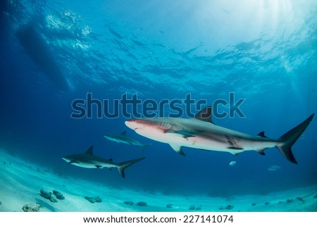 Sharks circling under the dive boat - stock photo