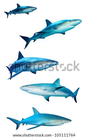 Sharks isolated on white background - stock photo