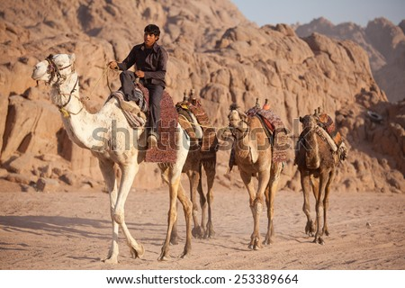 SHARM/EGYPT - 2012 MAY 30: bedouin with camels - stock photo