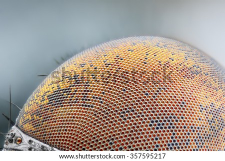 Sharp and detailed dried dead fly compound eye surface at extreme magnification taken with microscope objective