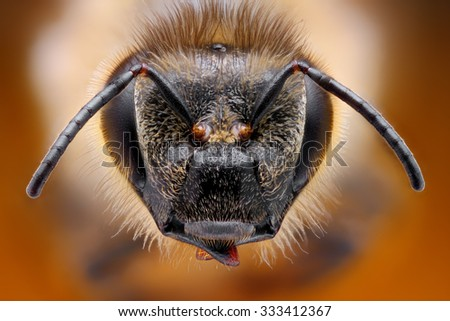 Sharp and detailed study of bee head taken with macro objective stacked from many shots into one photo