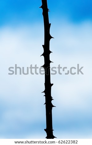 sharp rose thorns - stock photo