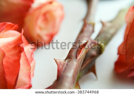 sharp thorns roses