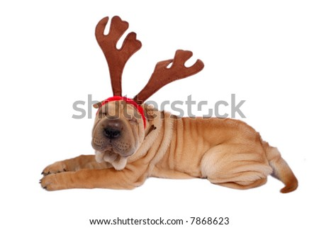 sharpei dog wearing christmas antler
