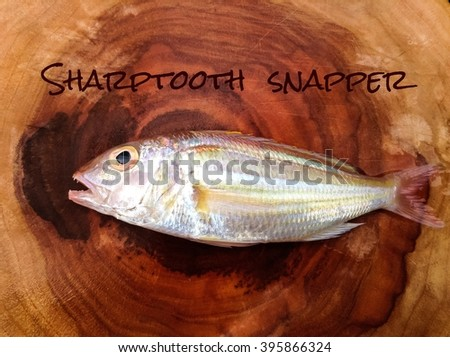 Sharptooth snapper /Fish's name collection /saltwater fish on wood background with name - stock photo