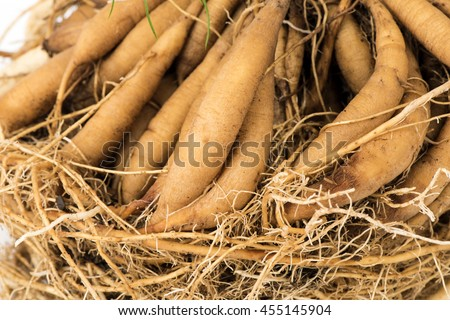 research papers on asparagus racemosus Research in environment and life sciences 1300 october, 2016 seed viability: the viability of asparagus racemosus seed was 97% however seed.