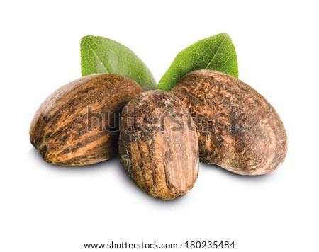Shea Nuts isolated with leaves - stock photo