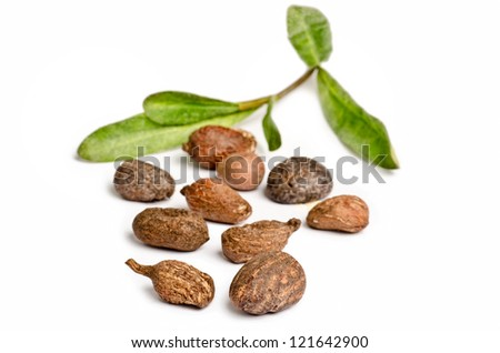 Shea nuts with leaves on white background - stock photo