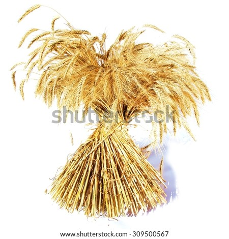 Sheaf of corn / cereal plant / white background