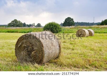 Sheaves of hay lying in a field.  - stock photo