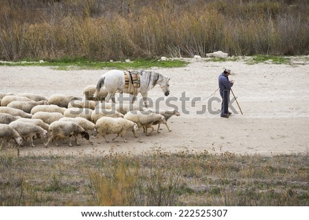 Sheep and herder in field. Castilla, Spain