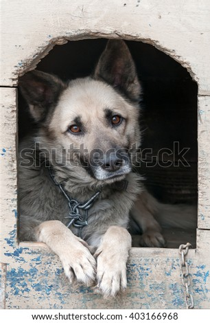 sheep dog is in a house - stock photo