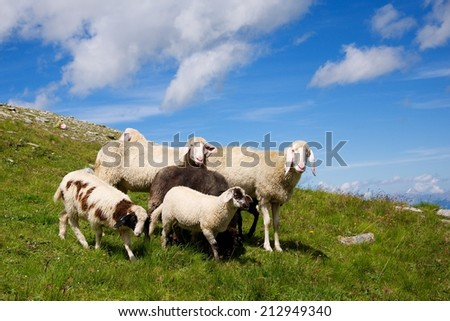 Sheep family on meadow - stock photo