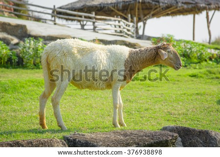 Sheep Farm - stock photo