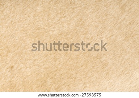 sheep fur texture close-up background
