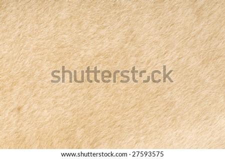 sheep fur texture close-up background  - stock photo