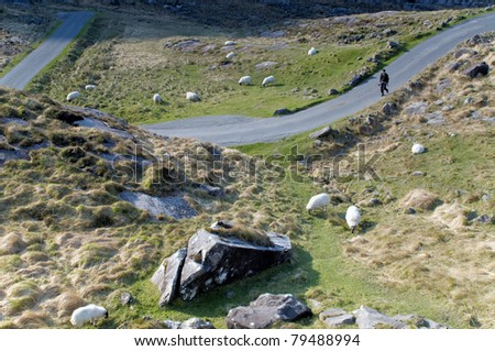 Sheep grazing at Gap of Dunloe, Ireland - stock photo