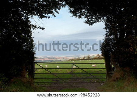Sheep grazing in a field framed by trees - stock photo