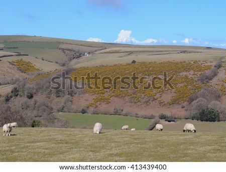 Sheep Grazing in a Field on the East Lyn River Valley with Panoramic Views of the Hills of Exmoor National Park in Devon, England, UK. - stock photo