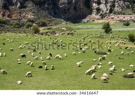 Sheep grazing in Crete.  Lassithi Plateau - Its fertile, crater-like land produces a variety of fruit and vegetables - Greece - stock photo