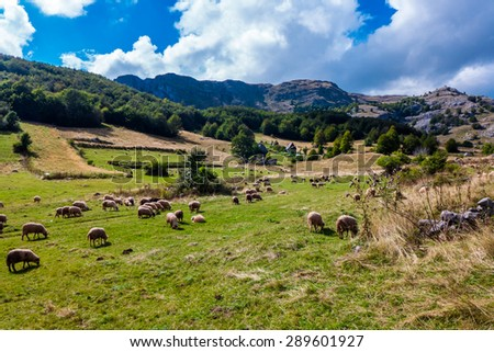 Sheep grazing in the field in the mountains.