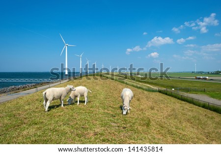 Sheep grazing on a dam along a lake in spring - stock photo