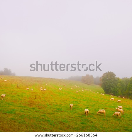 Sheep Grazing on Alpine Meadows in France, Morning Mist, Vintage Style Toned Picture - stock photo