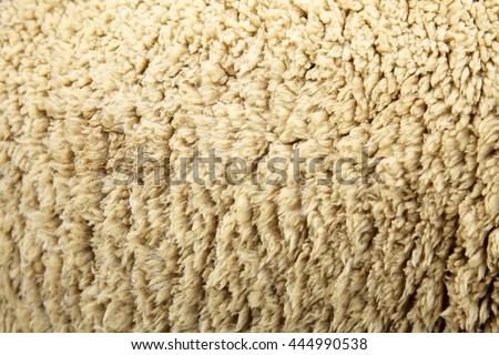 Sheep hair wool skin closeup background - stock photo