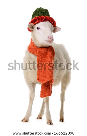 Sheep in Christmas clothes. animal isolated on white background - stock photo
