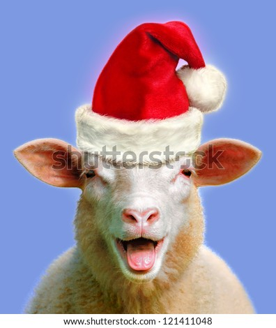 Sheep in christmas fever - stock photo