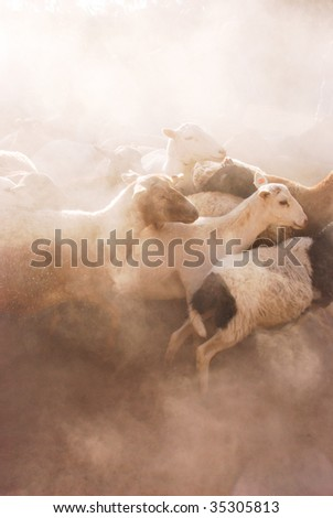 Sheep in Dust climbing over each other as they scramble to run in a circle on a farm near San Miguel de Allende in Mexico Yucatan - stock photo