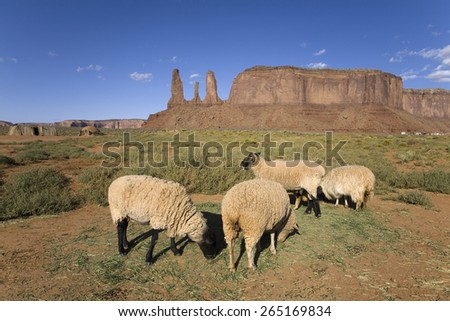 Sheep in front of red buttes and colorful spires of Monument Valley Navajo Tribal Park, Southern Utah near Arizona border - stock photo