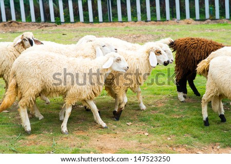 Sheep in green meadow - stock photo