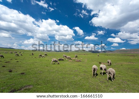 Sheep in the mountains of Lesotho  - stock photo