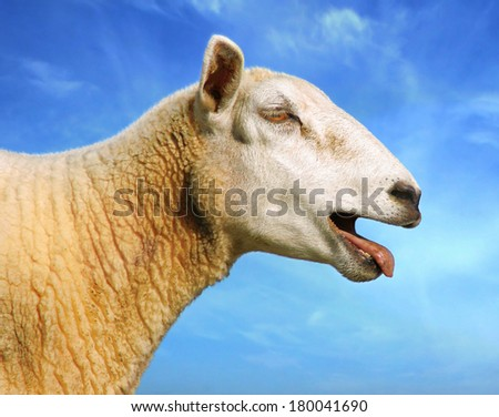 Sheep is cry out. Digital image processing from photo. - stock photo