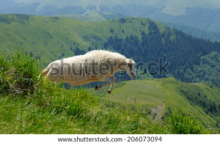 Sheep jumping in a mountain - stock photo