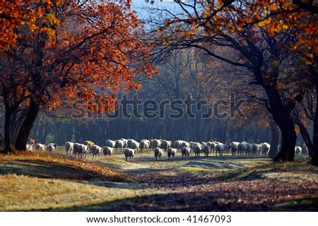 sheep on field in autumn