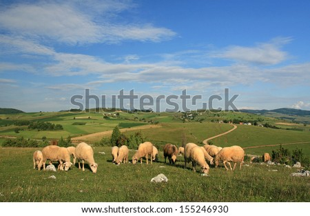 Sheep on pasture on hilly meadow - stock photo