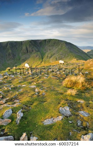 Sheep on St Sunday Crag in the English lake District, with Cofa Pike and Fairfield in the background