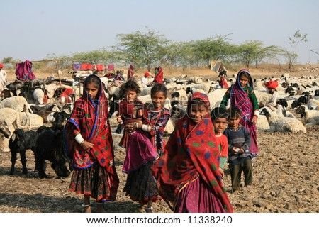 Sheep play a major role in the lives of nomadic people in the arid regions of western India