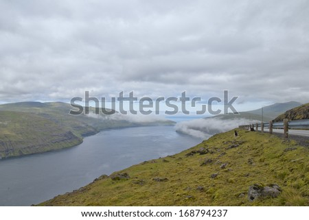 Sheep ram on the blue sea and grass background in a fjord
