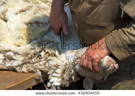 Sheared Stock Photos Images Amp Pictures Shutterstock