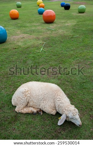 Sheep sleeps in the playground full of colorful rubber balls. - stock photo