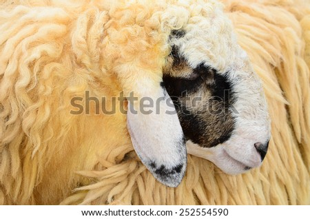 Narisafotoss S Portfolio On Shutterstock