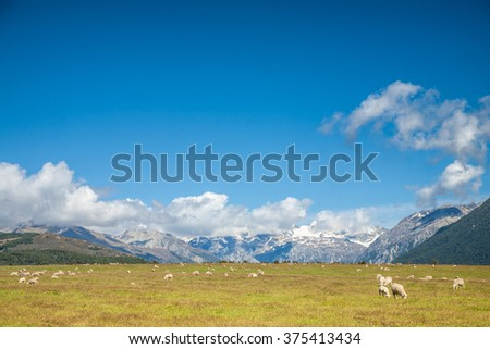 Sheeps grazing at a pasture in New Zealand with snow capped mountains in background - stock photo